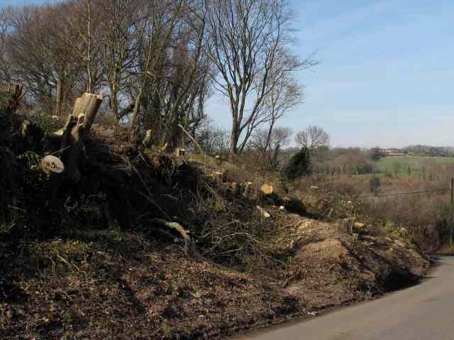 Chapel Wood Clearance 1