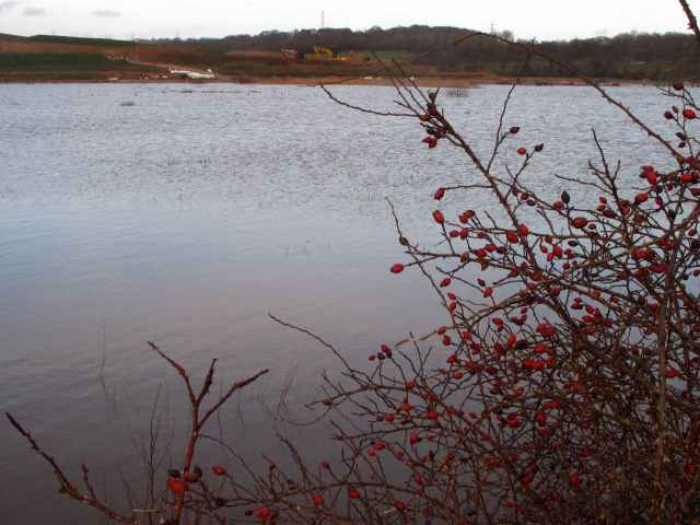 CHWaterscape Berries